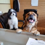 Pristine Pets Welcoming Committee